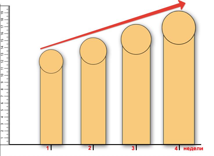 динамика роста члена